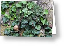 Overgrown Wall With Snail Greeting Card