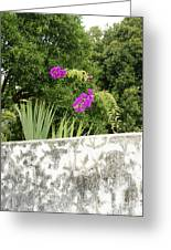Overhanging Blossoms Yaxcopoil Mexico Greeting Card