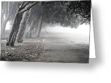 Overhanging Trees Greeting Card