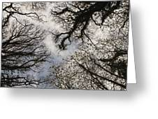 Overhead Trees In Exmoor, United Kingdom Greeting Card