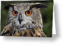 Owl Bubo Bubo Portrait Greeting Card