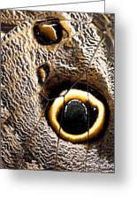 Owl Butterfly Wing Greeting Card