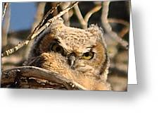 Owl Eyes Greeting Card