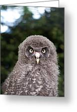 owl Greeting Card by Fizzy Image