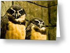 Owl I Greeting Card
