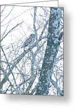 Owl II Greeting Card