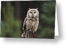 Owl In The Forest Visits Greeting Card