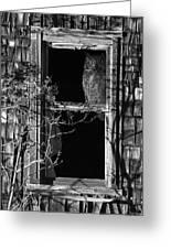 Owl In The Window Greeting Card