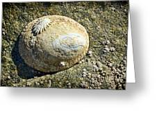 Owl Limpet Greeting Card