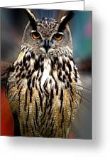Owl Living In The Spanish Mountains Greeting Card