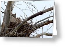 Owl Snuggle  Greeting Card by Rebecca Adams