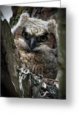 Owlet On The Watch Greeting Card