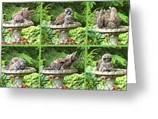 Owls Do Take Baths Greeting Card