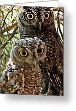 Owls From Amado Arizona Greeting Card