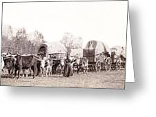 Ox-driven Wagon Freight Train C. 1887 Greeting Card