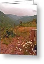Ox-eye Daisies On Skyline Trail In Cape Breton Highlands Np-ns Greeting Card