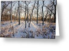 Oxbow Park Golden Hour Greeting Card