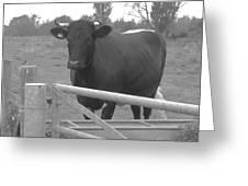 Oxlease Bull Greeting Card