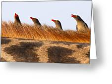 Oxpeckers Greeting Card