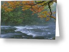 Oxtongue River Provincial Park, Dwight Greeting Card
