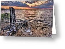 Oyster Bay Stump Sunset Greeting Card