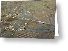 Oyster Beds, La Tremblade Greeting Card