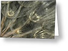 Oyster Flower Seed Head Greeting Card