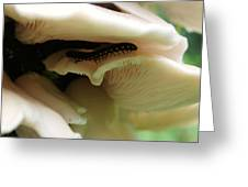 Oyster Mushrooms Greeting Card
