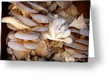 Oyster Mushrooms Greeting Card