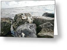 Oysters On The Rocks Greeting Card