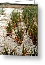 Oysters Sea Grass Greeting Card