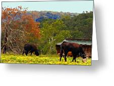 Ozark Cows Greeting Card