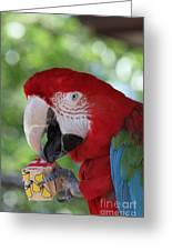 P Is For Parrot Greeting Card