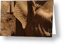 Pachyderm Panorama - San Diego Zoo Greeting Card