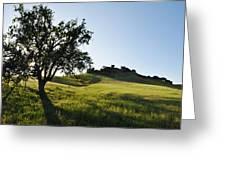 Pacific Coast Oak Malibu Creek Landscape Greeting Card