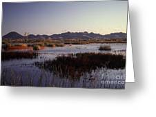Pacific Flyway Greeting Card