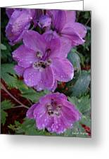 Pacific Giant Delphinium Greeting Card