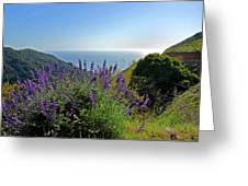 Pacific Lupines Greeting Card