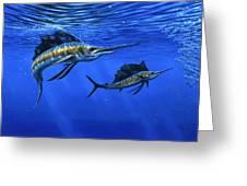 Pacific Sailfish Greeting Card