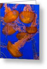 Pacific Sea Nettle Cluster 2 Greeting Card