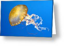 Pacific Sea Nettle Greeting Card