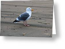 Pacific Seagull Greeting Card