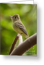Pacific-slope Flycatcher Greeting Card