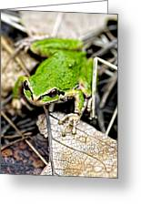 Pacific Tree Frog 2a Greeting Card