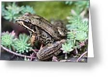 Pacific Tree Frog Among Succulent Plant Greeting Card by David Gn