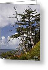 Pacific West Coast Trees Greeting Card