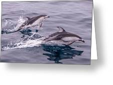 Pacific White Sided Dolphins Greeting Card