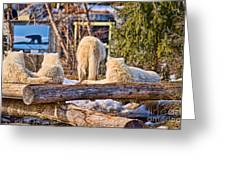 Pack Of Arctic Wolves Watching A Polar Bear Movie Greeting Card