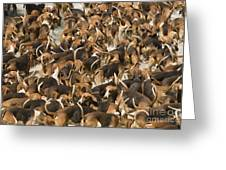 Pack Of Hound Dogs Greeting Card