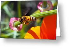 Packin Poppy Pollen Greeting Card